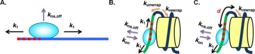Non-specific binding model of TF dissociation from (A) naked DNA and (B and C) from a nucleosome. (A) In the absence of the nucleosome, the TF can slide along the DNA in two directions (black arrows, k1) or dissociate from the DNA (Purple arrow, kns,off). (B) In the presence of a nucleosome, five possibilities for the next step of a certain state exist: (i) and (ii) the TF can slide along both directions in the unwrapped nucleosome (black arrows, k1); (iii) and (iv) the nucleosome can unwrap and rewrap (orange arrows, kunwrap, krewrap); or (v) the TF can dissociate from the unwrapped nucleosome (purple arrow, kns,off). The figure shows LexA binding to a non-specific site. Among all the binding sites, only one site is the specific target for the TF (red dashed line in (A) and (B)) and the others are non-specific binding sites for the TF. (C) Illustration of the minimum distance (d in bp) between the TF and the unwrapping position of the nucleosome. At this minimum distance when the TF binds to DNA, the nucleosome cannot rewrap anymore and the TF can only slide in one direction.