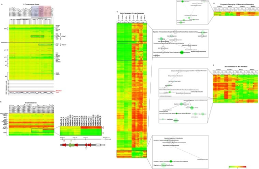 "DNA Methylation.A. X Chromosome DNA Methylation and XIST Expression. Methylation levels of genes in the X-chromosome (S6A Table) are shown on the heatmap. Hierarchical clustering was performed on the samples, as indicated by the dendrogram. The genes are ordered according to their location (from the beginning to the end of the chromosome). Samples that show loss of DNA methylation for the ""Enz"" cluster are highlighted in blue, those that show DNA methylation for the ""Ecm"" cluster are highlighted in pink, and for both clusters in mauve. Genes located in the regions of loss of DNA methylation are listed to the right of the heatmap. XIST expression is shown on the line graph, with the detection limit for the microarray indicated by the red line. B. DNA methylation at imprinted loci. Methylation levels for imprinted probes (S6B Table) are shown on the heatmap. Hierarchical clustering was performed on the samples, as indicated by the dendrogram. The genes are ordered according to chromosome location; genes are listed to the left. The inset at the right shows a detail of the NESP/GNAS complex locus, indicating the positions of the CpG sites that were hypermethylated (red triangle) vs. hypomethylated (green triangle) in the late passage samples relative to the NESP/GNAS and NESPAS exons. C, D, E. Heatmaps showing differential DNA methylation genes for early vs. late passage (C), mechanical vs. enzymatic passage (D), and Mef vs. Ecm substrate (E). In heatmap (C), the black boxes indicate genes for which the DNA methylation levels in the late passage MefMech (P103) samples was more similar to those in the early passage samples. Probes were selected by multivariate regression. Functional enrichments identified by GREAT analysis are shown to the right of the heatmaps, visualized using REVIGO [13]. Samples were arranged according to passage and culture method, and hierarchical clustering was performed on the genes only. In the functional enrichment results, the size of the node indicated the number of contributing GO terms, and color of the nodes indicates the FDR (darker color for lower FDR), and the edge length indicates the similarity between GO terms (shorter edge for more similar terms)."