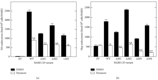 Endocytosis of HA and Hep by HARE CD variants is blocked by a dynamin inhibitor. WT cells were washed and preincubated in Endocytosis Medium as in Figure 2 and pretreated in medium with DMSO alone (black) or with 300 μM dynasore (white) at 37°C for 30 min. The medium was then replaced with fresh media containing DMSO alone or dynasore and 125I-labelled HA (a) or Hep (b). The cells were incubated at 37°C for 4 h and specific cell-associated ligand was determined as noted in Methods section. Values are the means ± SE (n = 3) and significant differences (Student's t-test) between treated and control samples are indicated: *P < 0.005; **P < 0.0005.