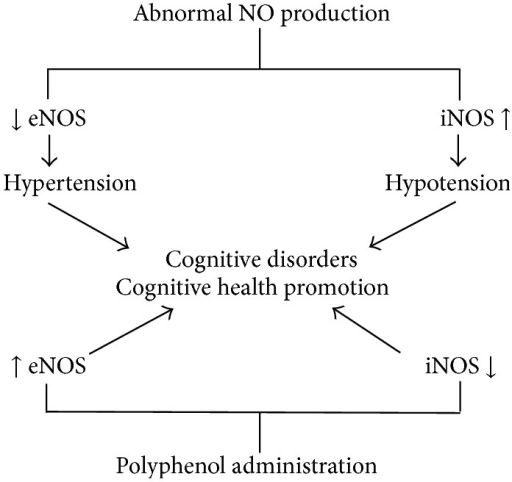 Changes of eNOS and iNOS activity and their effects upon human cognitive function.