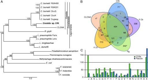 Phylogenetic relationship and protein clusters of 12 genomes from the order Legionellales. (A) The phylogenetic tree was inferred using maximum likelihood from a concatenated alignment of 285 single copy orthologous genes. The numbers on each node represent the support of 1,000 bootstrap replicates. (B) Venn diagram depicting numbers of protein clusters in five specified groups or genomes, Rg, Rickettsiella grylli; 5 Cb, All 5 C. burnetii genomes; 4 Lb, all four Legionella genomes. *includes both clusters and single proteins not found in any cluster. (C) A comparison between COG assignment for coding genes (green) and pseudogenes (blue) found in CRt. A: RNA processing and modification; J: translation, ribosomal structure and biogenesis; K: transcription; L: replication, recombination, and repair; C: energy production and conversion; M: cell wall/membrane biogenesis; D: cell cycle control, cell division; F: nucleotide transport and metabolism; H: coenzyme transport and metabolism; G: carbohydrate transport and metabolism; O: posttranslational modification, protein turnover, and chaperones; U: intracellular trafficking; T: signal transduction mechanisms; I: lipid transport and metabolism; V: defense mechanisms; P: inorganic ion transport and metabolism; Q: secondary metabolites biosynthesis, transport, and catabolism; N: cell motility; R: general function predicted only; S: function unknown; X: not assigned.