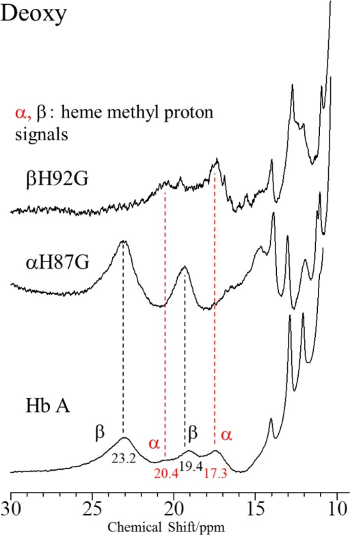 600 MHz 1H NMR spectra of Hb A, rHb(αH87G) and rHb(βH92G) in the deoxy-form.Spectra are between 10 and 30 ppm at pH 7.0 and 25°C. The hemoglobin concentrations of Hb A, rHb(αH87G) an rHb(βH92G) were 1 mM, 800 and 500 μM, respectively, on a heme basis in 0.05 M phosphate buffer (pH 7.0). In addition, rHb(αH87G) and rHb(βH92G) contained 10 mM imidazole.