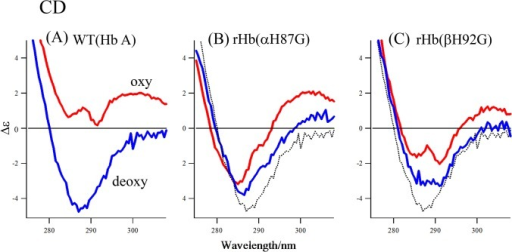 CD spectra of Hb A, rHb(αH87G) and rHb(βH92G).Spectra are Hb A (A), rHb(αH87G) (B) and rHb(βH92G) (C) in the deoxy (blue spectra) and oxy forms (red spectra) in the wavelength region between 275 nm and 320 nm. Hemoglobin concentration, 45 μM (in heme) in a 0.05 M phosphate buffer (pH 7) containing 5 mM imidazole and a metHb reducing system. The broken black lines in (B) and (C) indicate the curve of deoxy Hb A.