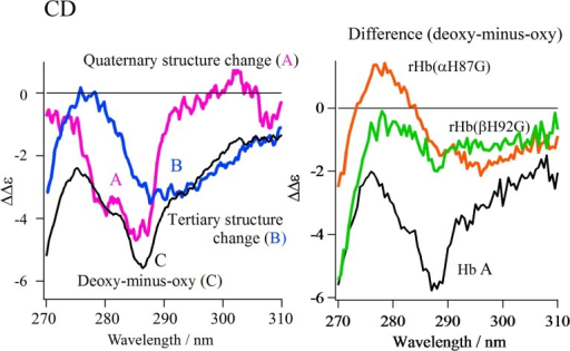 Left: The CD spectral changes due to the quaternary and tertiary structure transition for Hb A.The spectra are the quaternary structure transition (A: pink spectrum) and tertiary structure transition (B: blue spectrum) expected for Hb A and the observed deoxy-minus-oxy difference spectra of Hb A (C: black spectrum). Right: Comparison of the deoxy-minus-oxy difference spectra of rHb(αH87G) and rHb(βH92G) with that of Hb A. The difference spectra are Hb A (black spectrum), rHb(αH87G) (orange spectrum) and rHb(βH92G) (green spectrum).