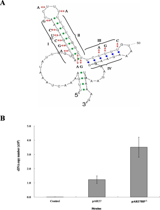 mRNA secondary structure and long-transcript levels.(A) Predicted mRNA secondary structure of the C–D intergenic region in CDB3 ars1 and altered nucleotides to abolish the hairpin structure. The four regions of the two stem-loops are indicated by symbols I, II, III and IV. (B) Expression levels of the long transcript in untreated (control) and arsenite-treated E. coli AW3110 strains harbouring pAR27 or pAR27HPΔ. The arsenite treatment was at 0.5 mM for 5 min and qPCR was carried out using RT-DF/RT-DR primer pairs. Each data point corresponds to average copies of ArsD cDNA (copies/µL) and the error bars indicate standard deviation of three independent measurements.