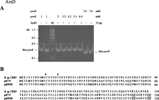 Mobility shift assay of ArsD.(A) EMSA of ArsD binding to proR and proN. Indicated amount of each DNA fragment binds with (+) or without (−) ArsD. M is a 100 bp DNA ladder with representative sizes indicated. (B) Sequence alignment of ArsDs from Bacillus sp. CDB3 (AAD51848.1), E. coli pR773 (AAA93060) and Acidiphilium multivorum pKW301 (BAA24821). Accession numbers are in parentheses. The stars indicate conserved Cys in all three sequences and shadow indicates those not present in Bacillus sp. CDB3 ArsD.