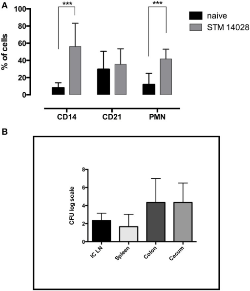 STM14028 infection induces an increase of innate immunity cell compartment and colonizes different organs of piglets orally infected. (A) The prevalence of CD14+, CD21+, and polymorphonuclear (PMN) cells was determined in ileo-cecal lymph nodes, 48 h post-infection with STM14028. The differences were statistically significant (***P ≤ 0.001, multiple comparisons t-test). (B) STM14028 count in ileo-cecal lymph nodes (ICLN), spleen, colon, and cecum of infected piglets. Data represent mean with error bars as SEM of six piglets per group.