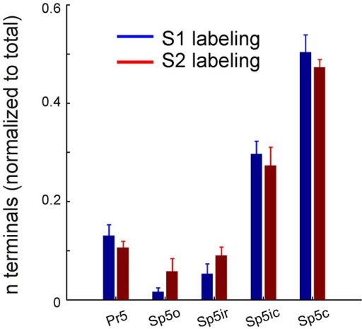 Corticofugal terminal counts in the trigeminal sensory nuclei following dual tracer injections in S1 and S2. Bar graph showing the total number of labeled terminals resulting from anterograde tracer injections into S1 (blue) and S2 (red) whisker representations, normalized by the total number of terminals resulting from each injection, averaged across animals (n = 3). Brackets indicate standard error of the mean.