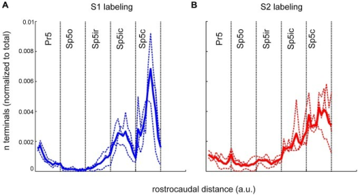 The rostrocaudal distribution of labeled terminals from S1 and S2 cortical injections across the different trigeminal sensory nuclei. (A) The binned terminal counts resulting from an anterograde injection into the S1 cortex of three rats. Each nucleus, irrespective of its actual rostrocaudal extent, has been binned into 10, equally spaced bins. The width of each bin varies according the rostro-caudal extent of each nucleus with Pr5 bins being the smallest. Dotted lines show the binned terminal counts averaged across all sections, for each animal. Thick line denotes the mean of these averages across animals. (B) Identical plot of terminal distribution from the S2 injection. a.u., arbitrary units.