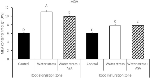 The content of lipid peroxidation product (MDA) in tall fescue exposed to non-stress control, water stress, and water stress with ASA treatment. The data represent mean ± SE (n = 4 replicated pots of plants and each pot with multiple plants). Columns marked with the same letter are not significantly different at p < 0.05.