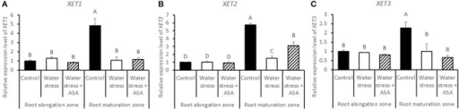 Relative gene expression level of XET1 (A), XET2 (B), and XET3 (C) in tall fescue roots exposed to non-stress control, water stress, and water stress with ASA treatment. The data represent mean ± SE (n = 4 replicated pots of plants and each pot with multiple plants). Columns marked with the same letter are not significantly different at p < 0.05.