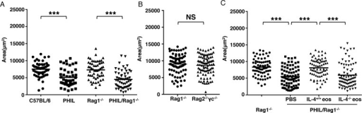 Eosinophils promote larval growth in an innate context.(A)–(C), C57BL/6, PHIL, Rag1-/-, PHIL/Rag1-/- and Rag2-/-γc-/- mice were injected IV with 25,000 NBL. (A) Body size (area) of larvae recovered from indicated strains 13 days post injection. (B) Body size (area) of larvae recovered from Rag1-/- and Rag2-/-γc-/- mice, 13 days post injection. (C) PHIL/Rag1-/- mice received PBS or 5 × 106 eosinophils from infected IL-5Tg+ or IL-5Tg+/IL-4-/- mice every 48 h from 0–5 days post IV infection. Body size (area) of larvae, 13 days post injection. Each data set was collected from two experiments with similar results. Values represent mean ± SD; n = 3–4 mice. Significant differences were determined by Student's t test or ANOVA and Tukey's test. ***p < 0.0001.
