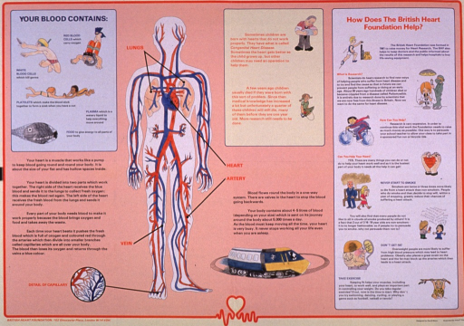 <p>Predominantly pale red poster with multicolor lettering.  Title in upper left corner.  Dominant visual image is a human form with all the major veins and arteries depicted.  Text on left side of poster explains blood and the function of the heart.  Text in center of poster deals with congenital heart disease and blood flow.  Text on right side of poster details the work of the British Heart Foundation and ways to keep one's heart healthy.  Publisher information at bottom of poster.</p>