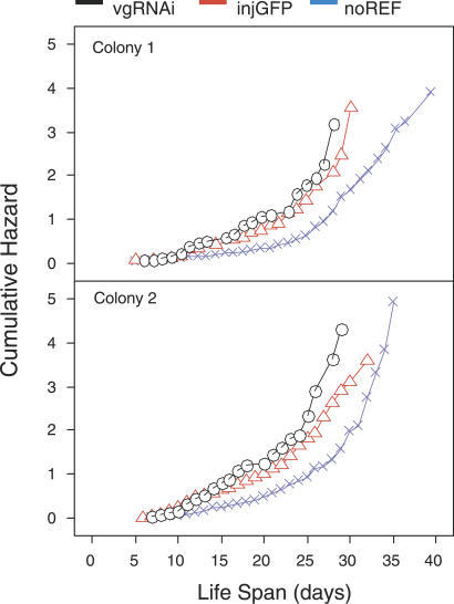 Effect of vitellogenin Gene Activity on LifespanCumulative hazard increases until all bees have died. Injected controls (injGFP) lived longer than knockdowns (vgRNAi; LRT = 4.38, df = 1, p < 0.036, hazard ratio [comparative survival experience calculated over the entire time of the study] = 1.29 d longer, confidence interval = 1.02–1.63 d). Longevity was affected by laboratory handling (LRT = 43.4, df = 1, p < 0.0001, hazard ratio = 1.96 d longer for non-injected reference (noREF) bees compared with injGFP bees, confidence interval = 1.61–2.38 d).