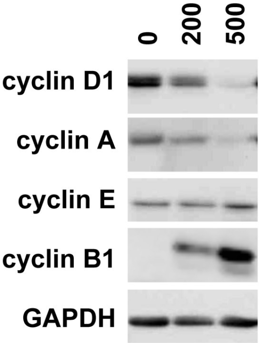 Iron alters the cell cycle distribution of T51B cells. Proliferating cells were treated with the indicated concentrations of FAC (in μM) for 5 days and processed for western blots using antibodies specific for cyclin D1, cyclin E, cyclin A, cyclin B1, and GAPDH as gel loading control. All panels are from a single experiment and are representative of results obtained at least 4 times.