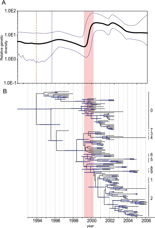 Population dynamics of genetic diversity of H5N1 viruses isolated from poultry in China.Bayesian skyline plot of the HA gene (A) showing changes in genetic diversity of H5N1 viruses. A measure of genetic diversity is given on the y-axis with the 95% HPD shown in blue. The red dashed line indicates the mean TMRCA of the Gs/GD lineage; the blue dashed line represents the time of the first detected H5N1 outbreak China. HA gene tree (B) scaled to time (horizontal axis) generated using the SRD06 codon model and uncorrelated relaxed clock model. Nodes correspond to mean TMRCAs and blue horizontal bars at nodes represent the 95% HPDs of TMRCAs. Numbers to the right of the HA tree indicate H5N1 clades based on the World Health Organization nomenclature system [36]. An identical phylogenetic tree with virus names is shown in Figure S3. The red vertical bar in both panels indicates the period of divergence of major H5N1 lineages in poultry.