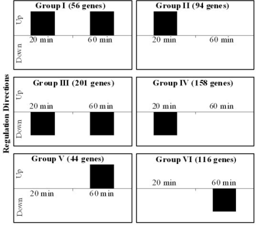 Groups of differentially regulated 431 genes with known functional class, which are categorized by their transcription directions upon 20 and 60 min exposures. Group I contained 23 genes upregulated upon both exposure times, while group II had 80 genes upregulated at 20 min and no significant changes upon 60 min exposure. Further, group III possessed 26 genes that were upregulated in response to 60 min exposure. Group IV contained 128 genes downregulated upon both exposure times, whereas 95 genes of group V exhibited downregulation after 20 min exposure. Finally, group VI had 79 genes that were downregulated upon 60 min exposure.