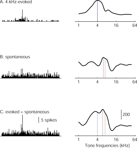 Neuronal population activity and derived log-likelihood functions.Left panels show population activity of the model 7-kHz-over-represented AI, and the right panels show stimulus log-likelihood functions. (a) Response of the model to a 4-kHz tone pip (b) Elevated baseline activity in the absence of a stimulus (c) Summed spontaneous and 4-kHz-evoked activity). Each bar in the left panels represents the firing rate of a model neuron. The neurons are arranged by characteristic frequency, with low frequency-tuned neurons on the left and high frequency-tuned neurons on the right. Blue dotted lines in the right panels show the input frequency, red dotted lines show the over-represented frequency, and the black dotted lines mark the peaks of the log-likelihood functions.