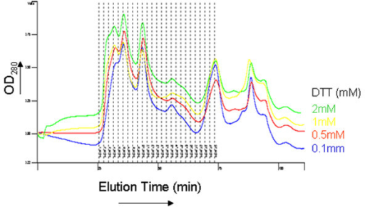 Effect of zinc and dithiothreitol (DTT) on LLER oligomerization. The LLER protein was applied to a gel-filtration column in the presence of 25 μM ZnCl2 and the indicated concentrations of DTT and eluted at a flow rate of 0.3 ml/min. The profile of the eluted protein is shown.