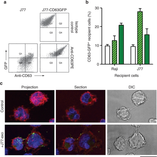 Uptake of CD63-GFP exosomes by immune cells.(a) Untransfected J77 T cells and J77 T cells stably expressing CD63-GFP (J77-CD63-GFP cells) were cultured in exosome-depleted medium for 24 h and exosomes were purified from supernatants by ultracentrifugation. Exosomes were labelled with anti-CD63-phycoerythrin and analysed by flow cytometry. (b) Uptake of CD63-GFP exosomes by T cells and B cells (recipient cells). Untransfected cells were incubated with CD63-GFP exosomes for 16 h and analysed by flow cytometry. Data represent the percentage of GFP-positive cells (±s.e.m.) of three independent experiments. Open bars, no exosomes; striped bars, Raji exosomes; filled bars, J77 exosomes. (c) Confocal microscopy detection of CD63-GFP (green) on the surface of recipient cells (Raji) after incubation with J77-CD63-GFP exosomes. Cell membranes were stained for the cell-surface molecule CD45 (red) and nuclei were stained with HOESCHT (blue). Images show maximal projections of confocal images (projection), one representative confocal section (section) and the DIC images. Scale bar, 10 ìm.