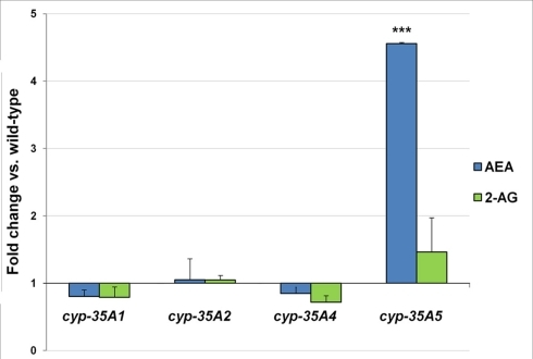 L4 stage wild-type and mutant animals were collected and assayed for the endogenous cannabinoids. Fold changes of anandamide (AEA) and 2-arachidonoylglycerol (2-AG) amounts ± SEM in cyp-35A mutants are shown. ***t-test p-value < 0.001.