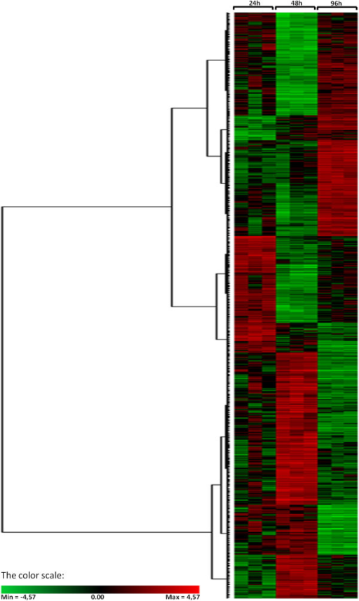 Hierarchical cluster of all differentially expressed probes. Distances were calculated using the Pearson similarity and agglomeration was performed according to the Ward's minimum variance algorithm. The heat-map diagram shows the relative expression level at the three time points (24, 48 and 96 hours post infection). Gradation from red to green represents strong up-regulation to strong down-regulation on a log scale. In each time point, each colored column represents a single biological replicate.