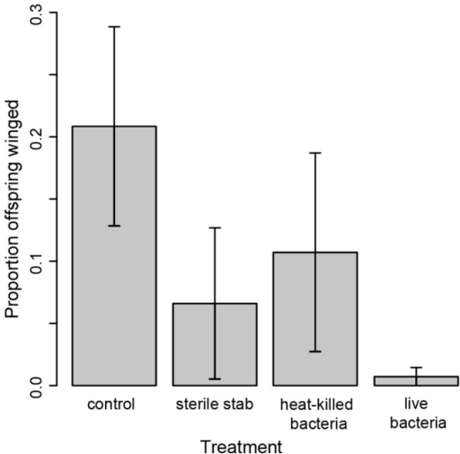 Impact of challenge on offspring production.Mothers exposed to bacteria and to bacteria elicitors did not produce more winged offspring than unexposed mothers. Young adult females were not stabbed (control) or were stabbed with needles dipped in PBS (sterile stab), a heat-killed bacterial solution or a solution of live E. coli (live bacteria). Includes all offspring produced within 9 days of challenge. Error bars = s.e.m.