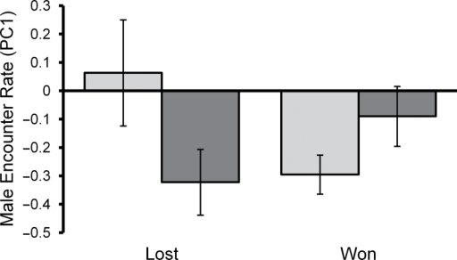 The effects of first contest outcome and social experience treatment on male encounter rate during a male's second contest. Light bars represent males with prior social experience and dark bars represent naive males. Mean ± S.E.