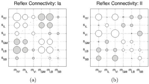 Hinton diagrams of the reflex circuits obtained with the default leg model.a) Circuits obtained for the Ia-type afferents, and b) those obtained for the II-type afferents. Unfilled circles represent excitatory connections, and filled circles represent inhibitory connections.