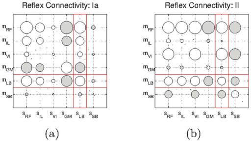 Hinton diagrams of the reflex circuits obtained for the system with the modified .a) Connections involving Ia-type afferents and b) II-type afferents. Unfilled circles represent excitatory connections, and filled circles represent inhibitory connections. The red squares highlight the modified connections with respect to the default system.