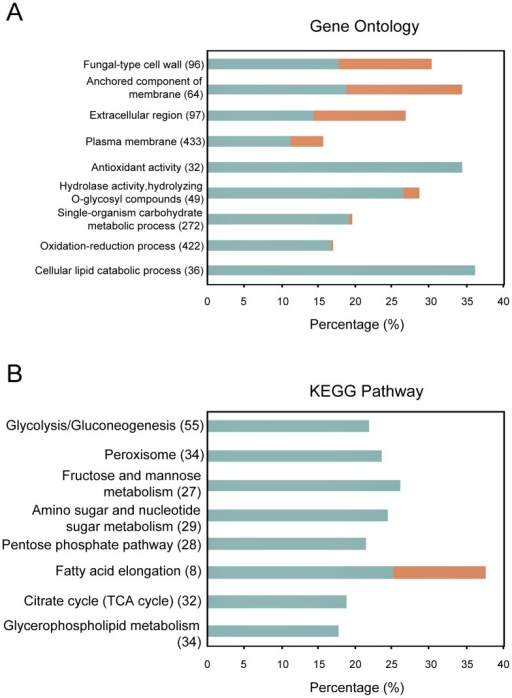 Analysis of Gene Ontology and KEGG pathway.Only the significantly enriched GO categories (A) or KEGG items (B) (p-value ≤0.05) in differentially expressed genes were shown. Blue and red bars represent up-regulated and down-regulated genes in LPS-treated cells compared to control, respectively. The percentage represents the ratio of genes within the genome in each category. The number of genes contained in each item is shown in brackets following the item names.