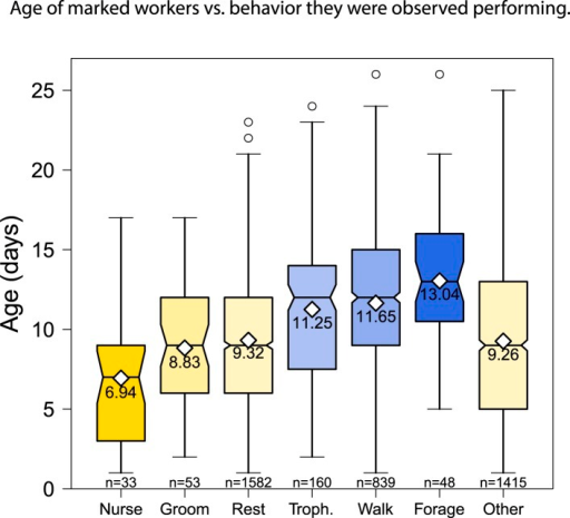 The behaviors performed by age-marked workers changed as the workersaged, from nursing to foraging.Boxplots show the distribution of age in days for each behavior; whitediamonds and the printed number show the mean age for each behavior; andthe number of observations for each behavior is shown at the bottom ofthe graph.DOI:http://dx.doi.org/10.7554/eLife.04775.004