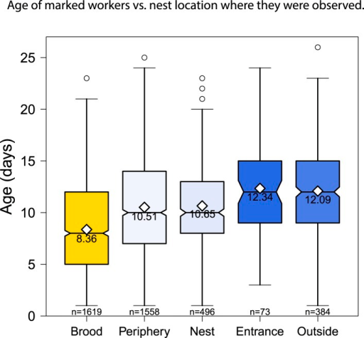 The location of age-marked workers also changed as the workers aged,from the nest area over the brood to outside the nest.Boxplots show the distribution of age with the mean and sample size foreach category.DOI:http://dx.doi.org/10.7554/eLife.04775.005