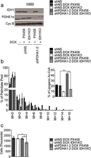 IDH1 loss suppresses contribution of glutamine carbon to lipogenesis under PDH suppression. a Western blot for PDH E1α and IDH1. Cyclophilin B was used as a loading control. b Percentage labeling in mass isotopologues of palmitate after 24 h of culture with [U-13C]glutamine. Inset displays labeling in lipogenic acetyl-CoA derived from glutamine carbon. c Cell count after 4 days of culture in normal serum. Data are the average of biological triplicates with error bars representing SD.