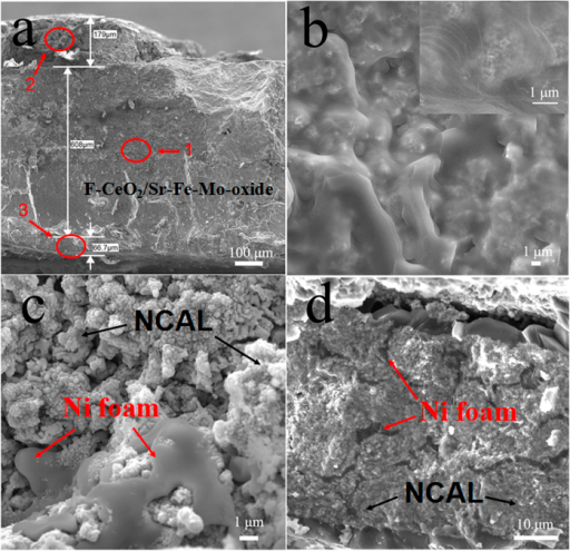 SEM micrographs of cross-sectional images ofa) fuel cell configuration; b) F-CeO2/Sr-Fe-Mo-oxidelayer; c) Ni foam pasted NCAL in cathode side; d) Ni foampasted NCAL in anode side after stability test.