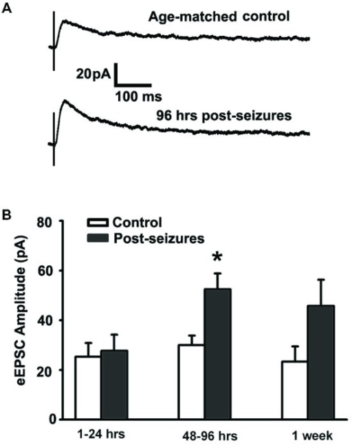Hypoxic seizures (HSs) enhance GluN function in hippocampal CA1 pyramidal neurons from P10 to P17. (A) Representative traces of GluN-mediated eEPSCs, pharmacologically isolated by blocking GluA and GABAA receptors, at a holding potential of +40 mV in hippocampal ex vivo slices from control and 96 h post-HS rats. (B) GluN-mediated eEPSC amplitude is significantly larger in neurons from 48–96 h post-HS rats (p < 0.05, n = 11 cells), but not in neurons from 1–24 h post-HS rats (p > 0.05, n = 11 cells) and 1 week post-HS rats (p > 0.05, n = 6 cells), compared to littermate control rats (n = 6–10 cells). *p < 0.05. Error bars indicate S.E.M.