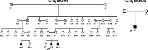 Pedigrees of the Chinese and Indian family with arRP.Arrow indicated the proband patient IV:2 in the Chinese family of RP-2236 (A) and the proband patient II:1 in the Indian family of RP-IC-90 (B). Solid symbol indicated affected individual while open symbols indicated unaffected individuals.