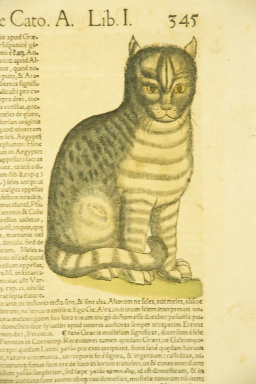 <p>Hand-colored woodcut of a cat.</p>