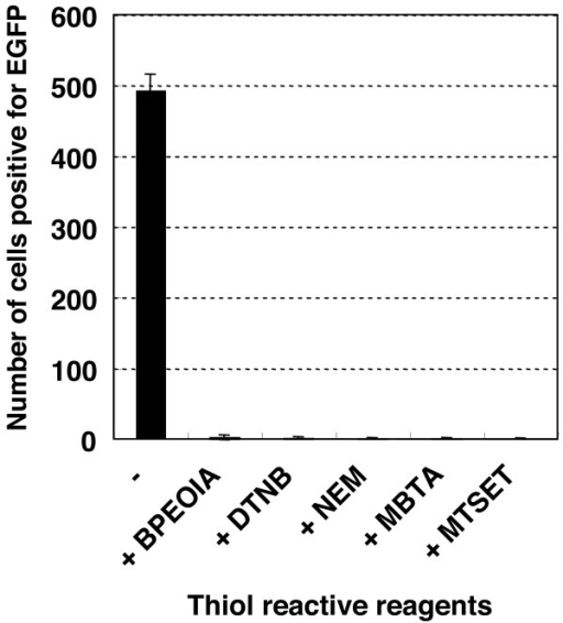 Infectivity of the 16PVs that have bound to BPEOIA, NEM, DTNB, MBTA, or MTSET. The 16PVs were incubated with the thiol-reactive reagent indicated at 37°C for 2 h. The samples were diluted by 1000-fold and added to HeLa cells. The cells were incubated for 2 days and harvested. The cells expressing EGFP were counted by a FACS. BPEOIA: biotin polyethyleneoxide iodoacetamid, NEM: N-ethylmaleimide, DTNB: 5,5'-dithiobis(2-nitrobenzoic acid), MBTA: 4-(N-maleimido)benzyl-trimethylammonium iodide, MTSET: [2-(trimethylammonium)ethyl] methanethiosulfonate bromide.
