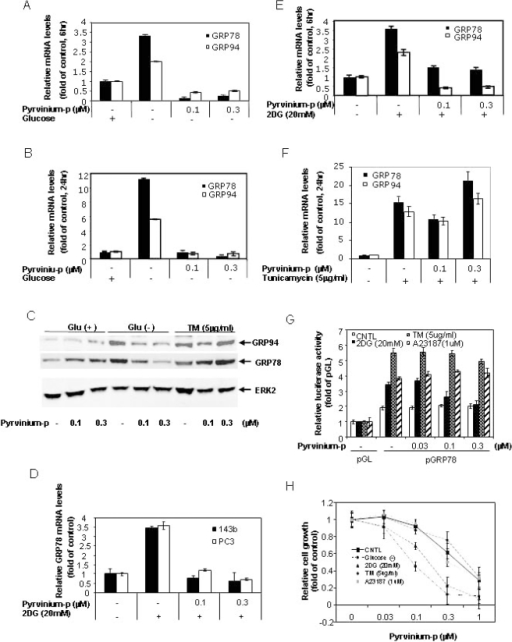 Pyrvinium suppresses GRP78 and GRP94 expression.Panel 3A, 3B, 3D 3E and 3F: Quantitative real-time RT-PCR analysis. Panc-1 cells (A, B, E and F) and PC3 and 143b cells (D), cultured in growth media with or without glucose (A and B), 2DG (D and E) and tunicamycin (F), were treated with pyrvinium phosphate (pyrvinium-p) for 6 hrs (A D and E) and 24 hrs (B and F). Total RNA was harvested and subjected to Taqman real-time PCR analysis for GRP78 and GRP94. Panel 3C: Western blot analysis. Panc-1 cells in growth media with or without glucose were treated with pyrvinium-p and tunicamycin for 24 hrs. The cell lysates were harvested for western blot using anti-KDEL antibody for detection of GRP78 and GRP94, Erk2 (internal control). Panel 3G: reporter gene assay for detection of GRP78 promoter. Panc-1 cells were co-transfected with GRP78-169/LUC and Renilla luciferase genes. The cells were treated with pyrvinium-p in combination with 2DG, tunicamycin or A23187 for 24 hrs. The firefly luciferase activity was measured and normalized against Renilla luiciferase activity using the dual luciferase kit. All of the transfections were performed in duplicates or triplicates. Panel 3H: cell growth assay. Panc-1 cells were treated with pyrvinium-p in combination with glucose starvation, 2DG, tunicamycin or A23187 for 72 hrs and cell proliferation was measured by alamarBlue staining (3 days in 96 well plates). Error bars: SD.