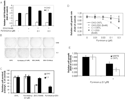 Over-expression of GRP78 protects cells from pyrvinium-induced cell death.A: Quantitative real-time RT-PCR analysis. CHO and C.1 cells cultured in growth media with or without 2DG were treated with pyrvinium phosphate (pyrvinium-p) for 6 hrs. Total RNA was harvested and subjected to Taqman real-time PCR analysis for GRP78. B and C: Clonogenicity assay. CHO and C.1 cells were seeded on day 1. The cultures were treated on day 3 with 2DG (10 mM), pyrvinium-p (0.1 µM) or combination of 2DG and pyrvinium-p for another 18 hrs and continued to culture for 2 weeks. The colonies were quantitated. D: alamarBlue readout of cell proliferation (3 days in 96 well plates) as described in figure 1. The SD of triplicate samples is shown.
