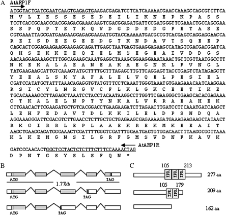Sequence and structure analysis of AtTRP1. (A) The nucleotide and amino acid sequences of AtTRP1 used for this study. The primers AtTRP1F/AtTRP1R used for RT-PCR to isolate the AtTRP1 coding sequence are underlined. (B) The 1.77 kb AtTRP1 gene has three predicted splicing variants according to the databases (AtEnsembl). (C) The corresponding putative proteins with TPR motifs and corresponding amino acid numbers indicated.