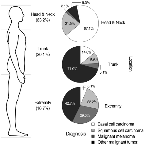 The proportion of the malignant skin lesions according to body location.