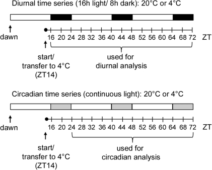 Experimental design of diurnal and circadian time series.Whole rosettes were harvested at the indicated ZT (zeitgeber time, in hours) and used for transcript and metabolite profiling. Temperature and light conditions are indicated. White, black and grey bars indicate the corresponding day, night and subjective night periods.