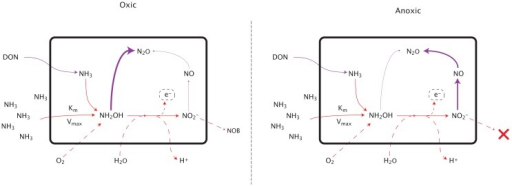 Pathways of nitrous oxide production during nitrification. See text for detailed explanation.