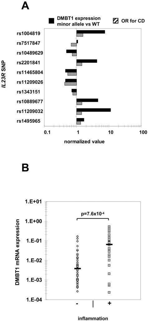 IL23R CD risk-increasing variants are associated with higher DMBT1 expression in minor allele carriers and intestinal inflammation increases DMBT expression levels in CD patients.(A) Intestinal DMBT1 expression and IL23R genotypes were determined in 75 biopsies from 27 CD patients. DMBT1 expression is presented as a quotient derived from dividing expression in minor allele carriers of the respective IL23R SNP by the expression in WT carriers. ORs for the respective SNPs were available from a previous study [8]. (B) Intestinal DMBT1 expression is significantly higher in inflamed colonic biopsies (n = 30) compared to not inflamed regions (n = 45) from 27 CD patients. Expression was normalized to β-actin in the respective samples. Each dot represents one biopsy.