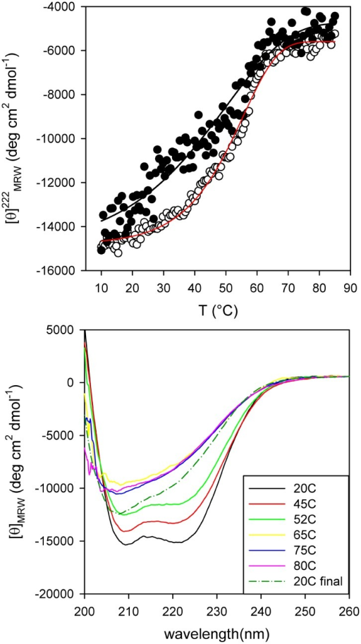 PhaPAz thermal stability.(A) Denaturation was followed by measuring the ellipticity change in the far-UV region at 222 nm. (○) PhaPAz 3 µM (apparent Tm = 55°C) (•) PhaPAz 1.5 µM. (B) Far-UV CD Spectra of PhaPAz (3 µM) in 20 mM sodium phosphate buffer pH 7.3 containing NaCl 50 mM and 1 mM DTT at different temperatures (from 20°C to 80°C). Recovered spectra were registered upon immediate cooling down the scanned sample and after a 10 min waiting period at 20°C.