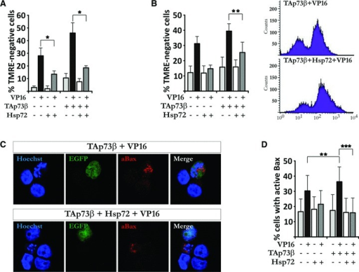 Hsp72 expression prevents TAp73β-induced mitochondrial dysfunction and Bax activation. (A, B) H82 cells were co-transfected with EGFP, Hsp72 vector and empty vector or TAp73β. Treatment and staining were performed as described in Figure 4A and B, and analysis was carried out using microscopy (A) and FACS analysis (B). (C, D) H82 cells were transfected, treated and stained as described in Figure 4C and D. Images are representatives of three independent experiments. Figures are mean ± S.D. of three independent experiments, where *P < 0.05, **P < 0.01 and ***P < 0.001.