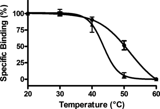 Thermostability of A2AR–SMALP and DDM-solubilized A2AR from P. pastorisA2AR–SMALP (●) and DDM-solubilized A2AR (▲) prepared from P. pastoris overexpressing A2aR were incubated for 30 min at the stated temperatures, chilled on ice, before specific binding of [3H]ZM241385 was determined as described in 'Methods'. Data are expressed as specific binding relative to the 20°C data point (mean ± S.E.M. of three separate experiments performed in triplicate).