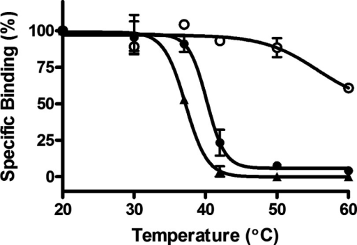 Thermostability of A2aR–SMALP, DDM-solubilized A2aR and membrane-bound A2aR prepared from HEK293T cellsA2aR–SMALP (●), DDM-solubilized A2aR (▲) or membranes (○), prepared from HEK293T cells transfected with A2aR, were incubated for 30 min at the stated temperatures, then chilled on ice, before specific binding of [3H]ZM241385 was determined as described in 'Methods'. Data are expressed as specific binding relative to the 20°C data point (mean ± S.E.M. of three separate experiments performed in triplicate).